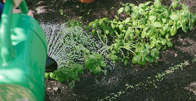 innaffiare-per-risparmiare-acqua-in-giardino