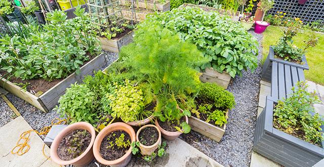 Organizzare il giardino per risparmiare acqua in giardino for Organizzare giardino