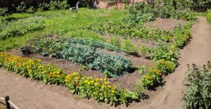 organizzare-le-piante-per-risparmiare-acqua-in-giardino