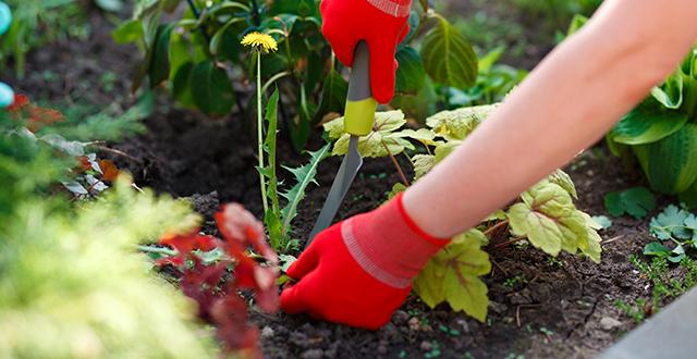 rimuovere-le-erbacce-per-risparmiare-acqua-in-giardino