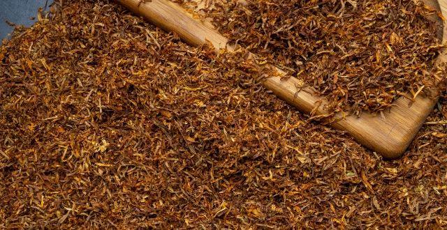 tabacco-insetticida-naturale