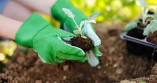 attrezzi-da-giardinaggio