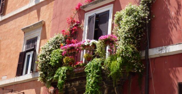 piante per arredare un balcone stretto e lungo