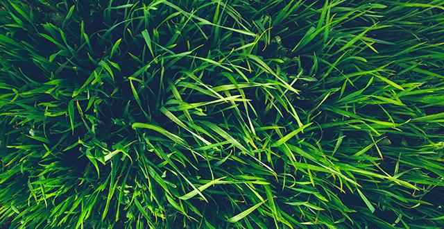 come-pulire-il-divano-in-tessuto-dalle-macchie-d'erba