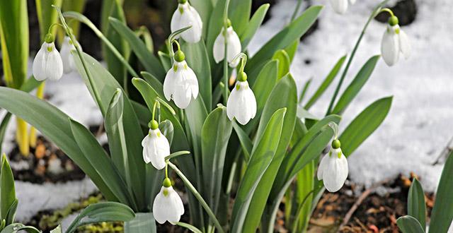 fiori-invernali-da-giardino resistenti al freddo
