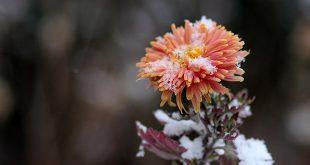 fiori-invernali-da-esterno