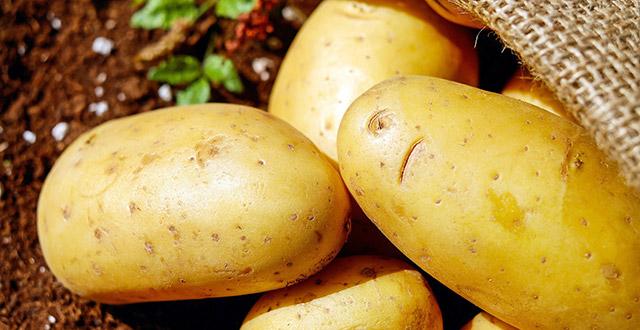 coltivare-patate-in-vaso