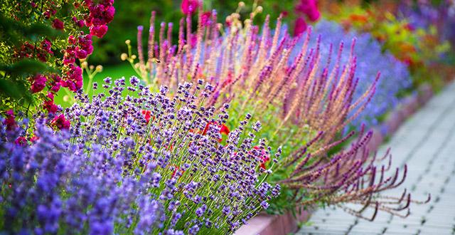 fiori-che-costano-poco