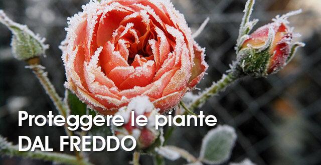 come-proteggere-le-piante-dal-freddo