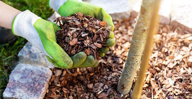 come proteggere le piante dal freddo con la pacciamatura