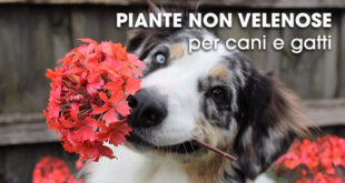 Piante-non-velenose-per-cani-e-gatti