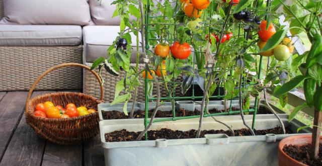 coltivare in balcone
