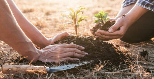 piantare un albero